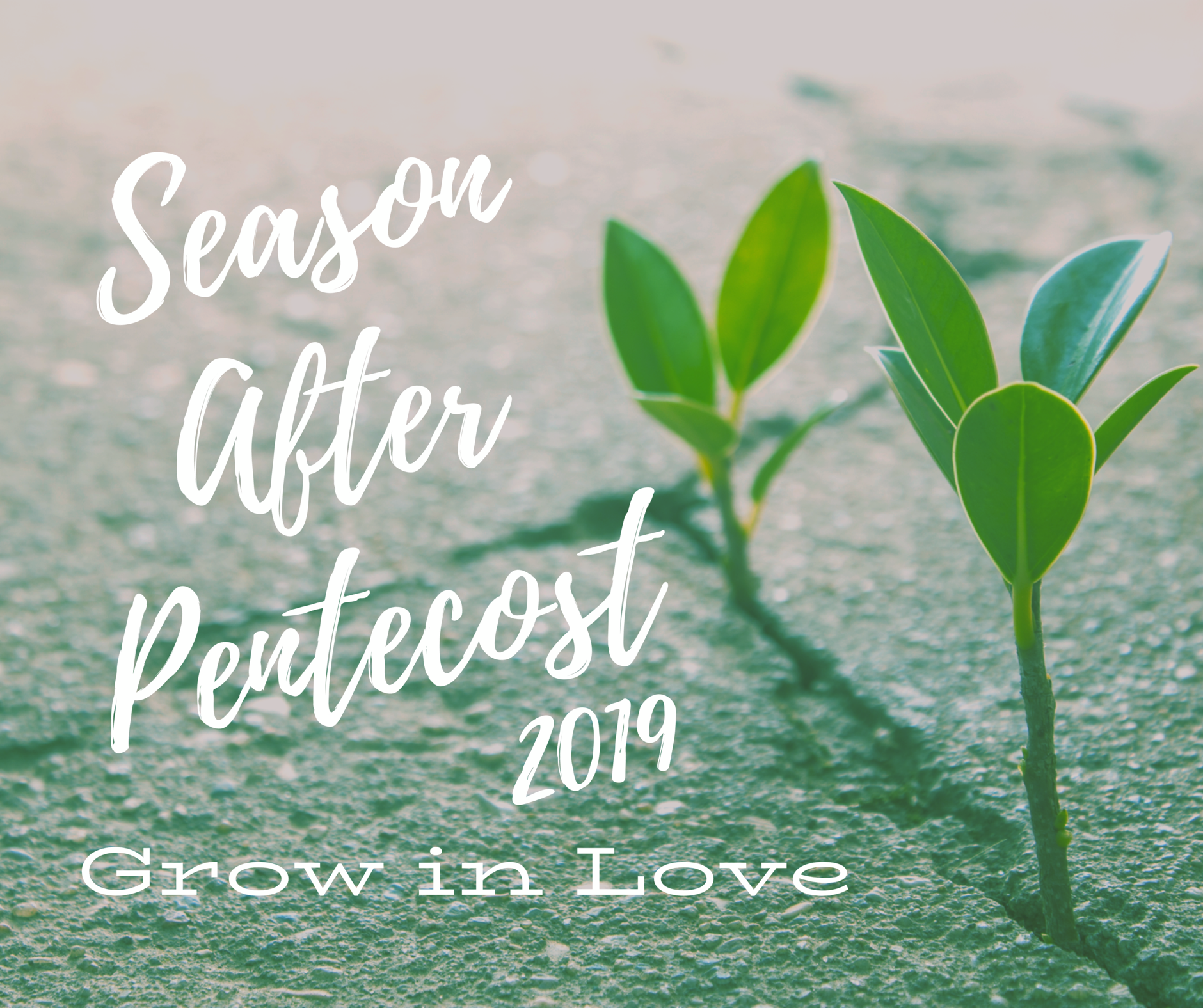 Season After Pentecost 2019